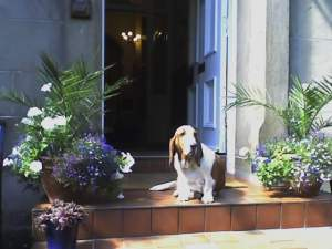 dog_courtyard